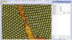 Work flow 2 : Image capture Work flow 2 : Measurements