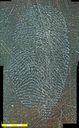 2D Fingerprint Brass wiped with cotton
