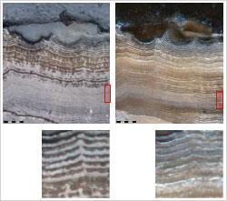 Fig1b-brightfield-darkfield-MPLAN-FLN20X-wider-texture-enhancement-x1000-EFI